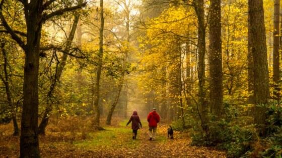 emmerson-willett-forest