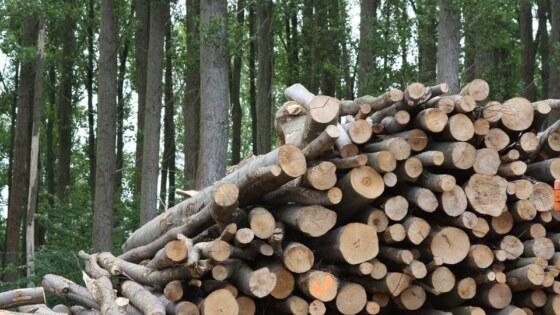 wood-825792_960_720